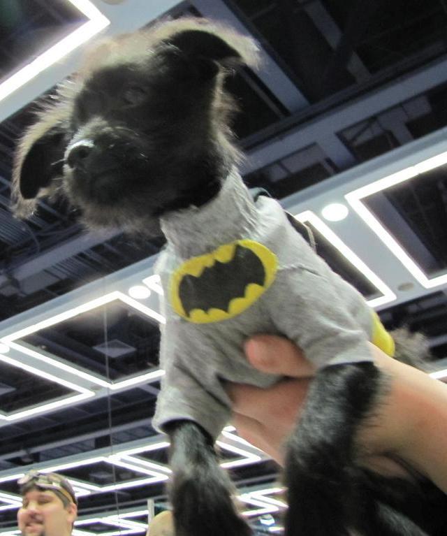 Emerald City ComicCon 2011 - Batdog!
