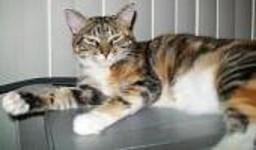 Click to visit and follow Adria the Cat on Twitter!