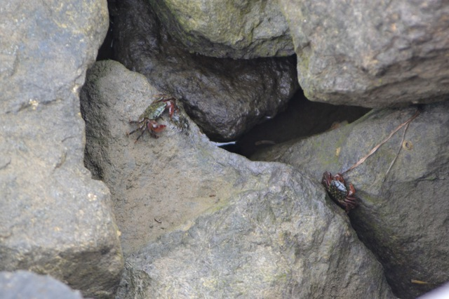 My SDCC adventure-crabs