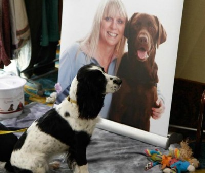 AT6 Ripples - Puppy from Hearing Dogs for Deaf People - Image courtesy GABIT Events