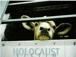 Holocaust Victim - Baby cows for veal