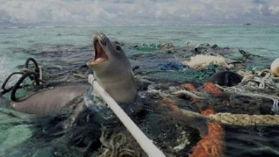 Plastic Pollution - Seals trapped